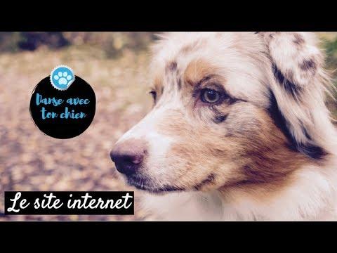 Dog dancing - Le site internet des passionnés - Danse avec ton chien