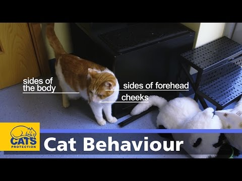 Body Language in Cats