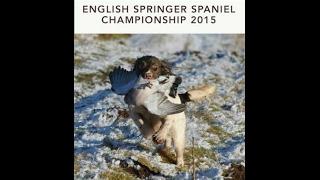 2015 English Springer Spaniel Championship