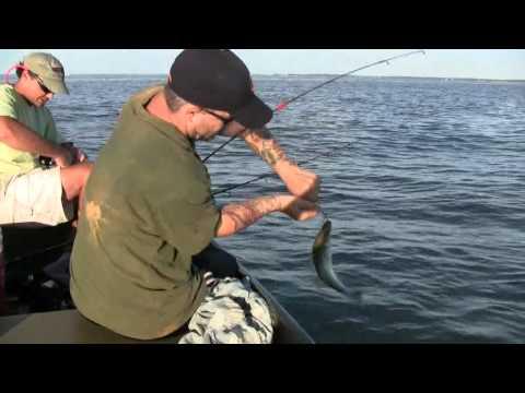 Eastern bay maryland, fishing fo schooling rock