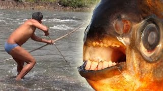 INDIAN BOWFISHING GIANT PACU  - Amazon River Monsters