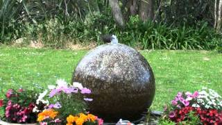 Our Pet Mother Blackbird 046.mpg