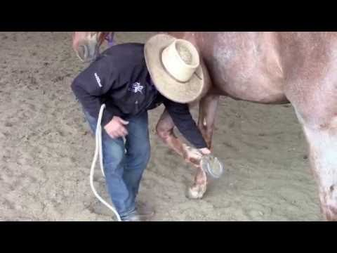 Trek Tip: Getting Your Horse To Lift Its Feet and Using A Hoof Pick