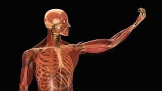 10 мифов о человеческом теле, которые пора забыть.