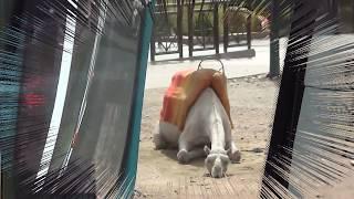 Верблюду грустно, достала конкуренция! Аnimals,Tiere