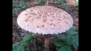 Экзотические грибы