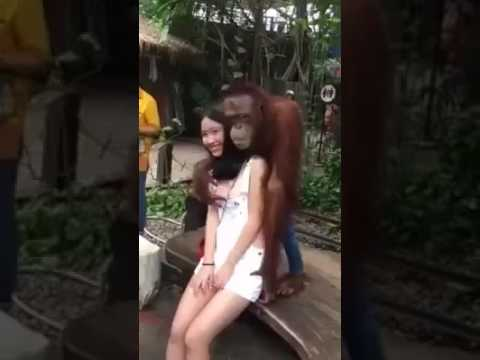 Girls having sex with chimps