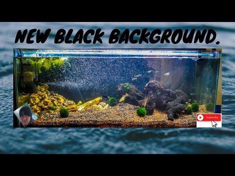 Black Background New Fishtank Scape Sept 19