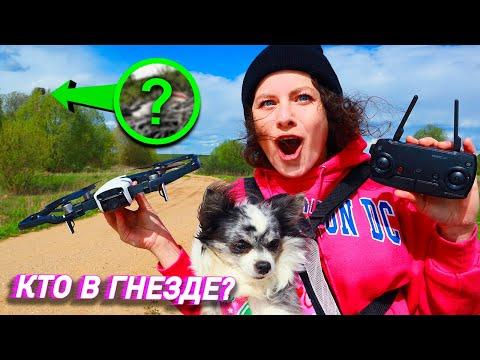 Сняли Гнездо Квадриком! Как Собаки Реагируют на ДРОН? ЭПИК ВЛОГ
