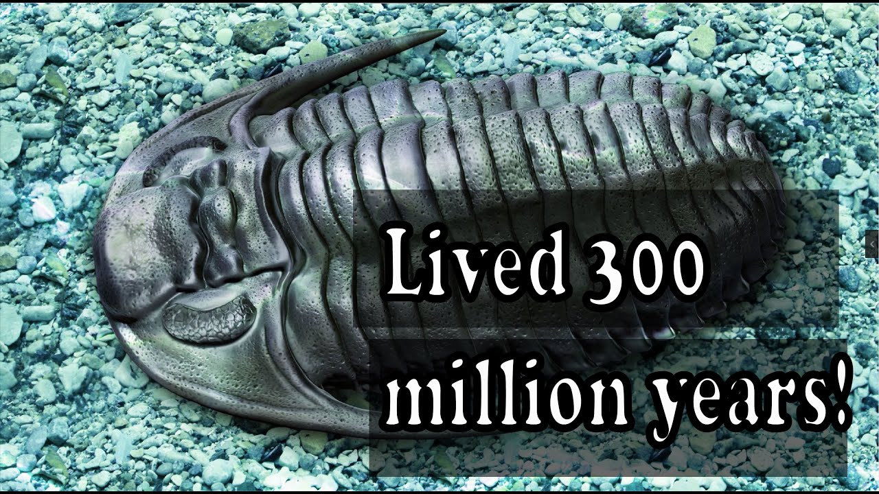 The clade lived for around 300 million years!