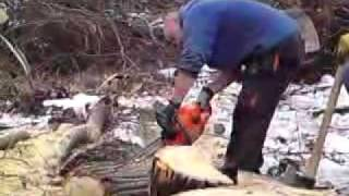 drwale w lesie czesc 3