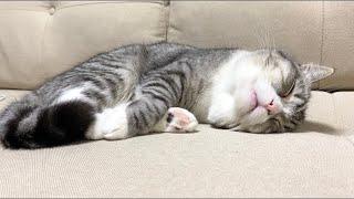 夢を見ながら寝ピクしてる猫がかわいすぎました…笑