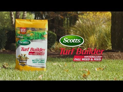 How Kill Lawn Weeds This Fall with Scotts® Turf Builder® WinterGuard® Fall Weed & Feed₃