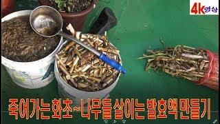 죽어가는 나무~화초도 살일 수 있는 발효액 만들기 공개? 100%무편집 4k영상