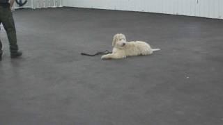 Aldens Kennels Inc. Dog Training Milwaukee Wisconsin