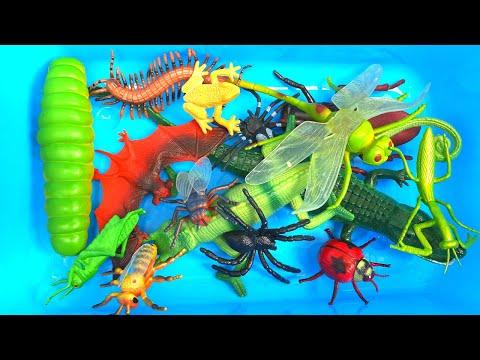 Learn Bug, Insect, Lizard Names English Korean 버그, 곤충, 도마뱀 이름 알아보기