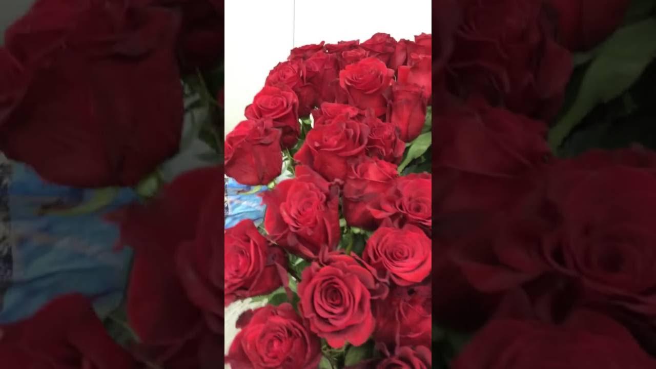 Суперпредложение! Комплект роз флорибунда из 5-ти саженцев (2717 .