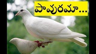 pavurama nee prema entha madhuramu || Telugu christian song with lyrics ||