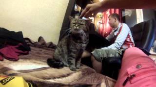 Кошка смотрит на тебя как на...