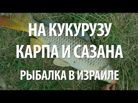 зимняя рыбалка на карпа - 2017-03-30 05:00:05