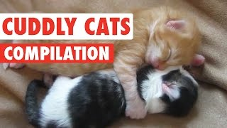 Cuddly Cats Video Compilation 2016