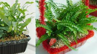 공기정화! 중금속, 미세먼지 제거에 탁월한 식물 심기 …