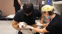 First Coast No More Homeless Pets Lifesaving Programs
