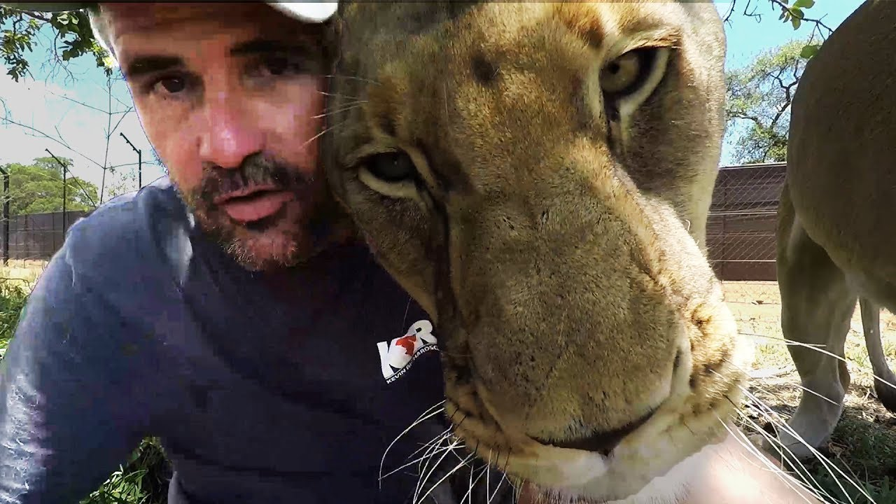 lion-cuddles-the-lion-whisperer