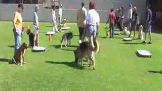 Group Dog Training Classes Begin
