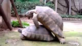 The Internet's Best Animal Sex  Viral Video Film School