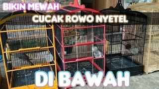 GACOR NYETEL CUCAK ROWO