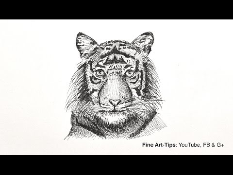How to Draw a Tiger's Head - Easy Way, Front View