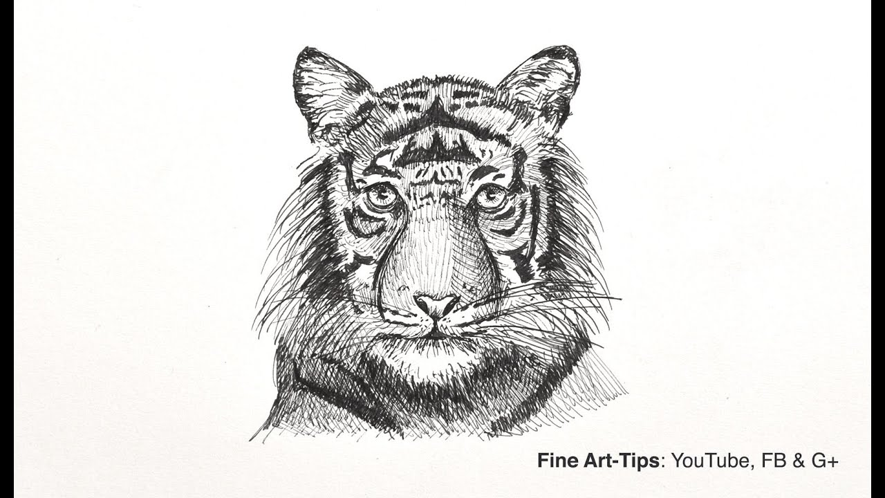 How To Draw A Tiger's Head  Easy Way, Front View