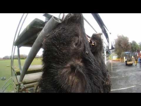Riwaka Hunting & Fishing Competition - New Zealand. Vlog 3
