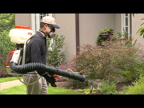 How To Select A Mosquito Control Professional