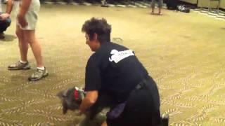 Teaching A Dog To Lift His Leg
