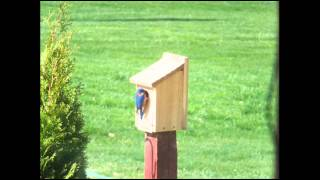 Wooden Bluebird House - Model BB1; Backyard Bird Feeder; Wooden Bird Houses