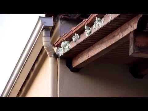Making Bats Leave Your Roof For Good