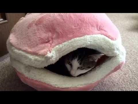 猫マカロンとモケちゃん