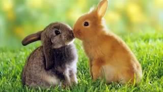 милые кролики и крольчата картинки под музыку