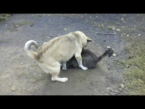 dog-cat-fight