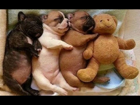 So Adorable! Sleeping Puppy Too Cute, Cutest Dogs