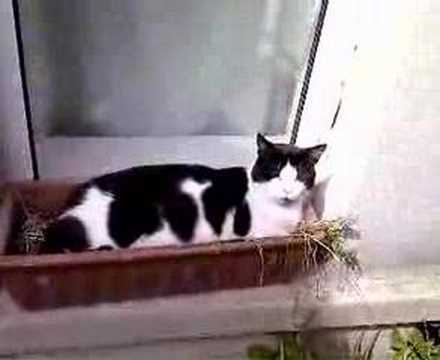 Cat in a window box - YouTube