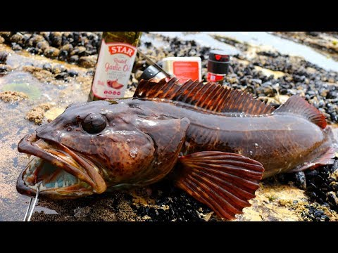 Catch And Cook From A Rocky Cliff: Personal Best Lingcod From Shore
