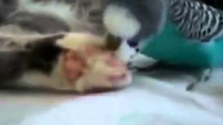 ►►  попугайчик разбудил кота