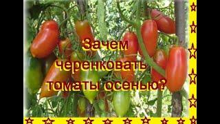 Зачем черенковать томаты осенью?