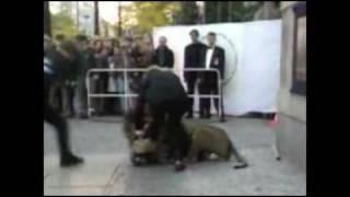 Хищники атакуют! (подборка)(Не ходите, дети, в Африку гулять! В Африке гориллы, львы и крокодилы..Кошечки-хомячки, и прочие муси-пуси -..., 2009-11-17T12:09:57.000Z)