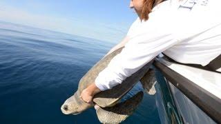 Raw: Rehabilitated Sea Turtle Released Into Wild