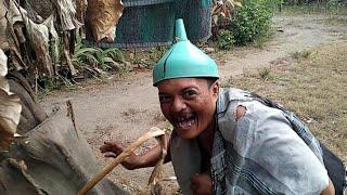 Download Video Abu Gosok Musuhe Suroto Jogja nyawang wit gedang MP3 3GP MP4