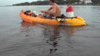 kayak dude lands monster black drum